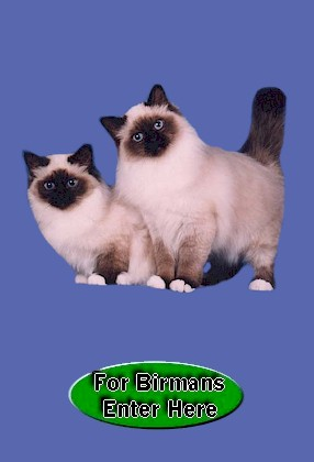 Click Here For Birmans